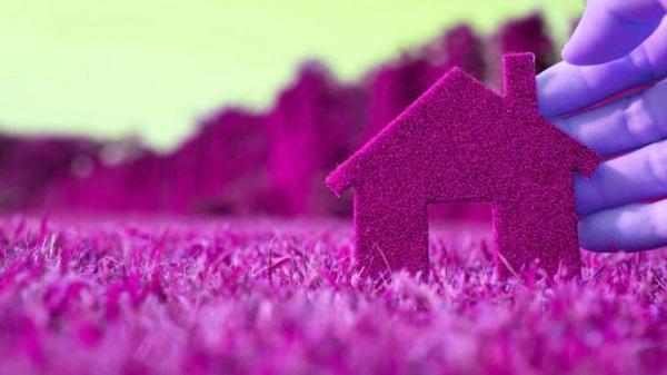 фиолетовый дом из растений